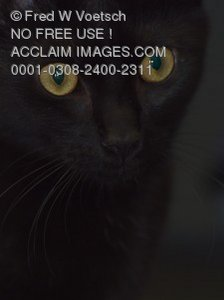 Stock Photo of a Black Cat With Yellow Eyes