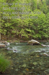 Stock Photo of The Smith River on the Forest Edge