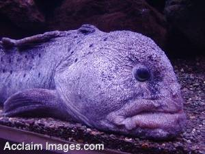 Picture of an Ugly Fish or Eel