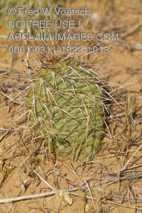 Stock Photo  of a Cactus