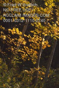 Stock Photo of Fall Foilage