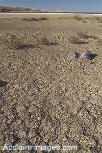 Stock Photo of Parched Earth at Lake Albert, Oregon