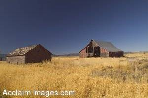 Stock Photo of Two Old Barns Sitting in a Flat Field