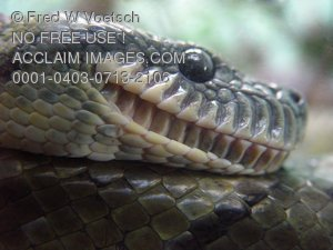 Stock Photo of a Snake