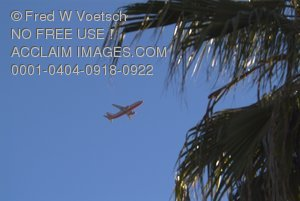Stock Photo of an Airliner and Palm Trees