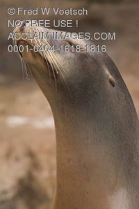 Stock Photo of a Seal