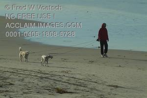 Stock Photo of Person Walking Dogs on a Beach