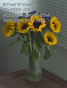 Stock Photo of a Vase of Sunflowers