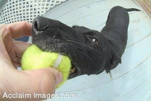 Amusing Stock Photo of a Dog With a Tennis Ball