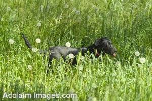 Stock Photo of A Dog Exploring In The Grass
