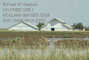 Stock Photo of White Farm Buildings