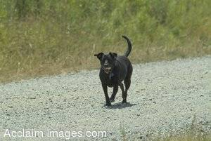 Stock Photo of a Dog On a Path