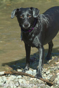 Stock Photo of a Dog By a River