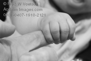 Stock Photo in Black and White of a Baby Gripping a Finger
