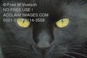 Stock Photo of a Black Cat