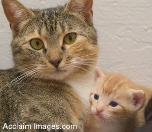 Stock Photo of a Mother Cat and Her Baby