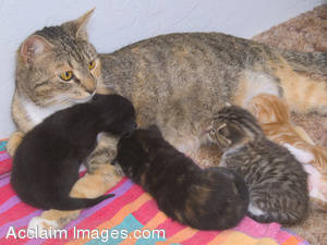 Stock Photo of a Mother Cat and Her Litter