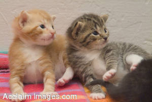 Stock Photo of Two Playful Kittens