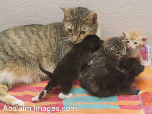 Stock Photo of  Playful Kitties With Their Mother