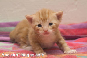 Stock Photo of a Cute Little Kitten