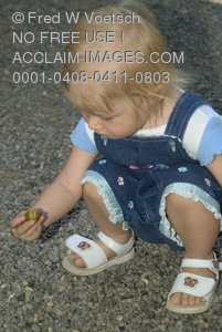 Stock Photo of a Toddler Picking Up an Acorn