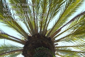 Clip Art Stock Photo of Palm Tree Branches