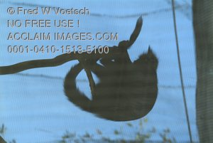 Clip Art Stock Photo of a Silhouette of a Monkey