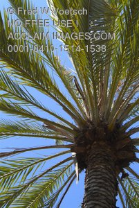 Clip Art Stock Photo of a Palm Tree