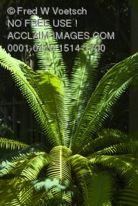 Clip Art Stock Photo of a Green Fern Plant