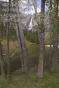 Yosemite Falls Through Trees From the Valley Floor - Clip Art Stock Photo