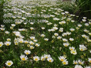 Clip Art Stock Photo of a Field of Daisy Flowers