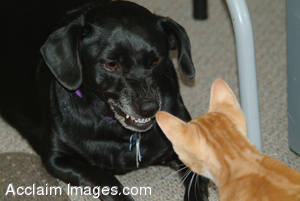 Stock Photo of a Cat and Dog