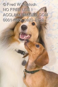 Clip Art Stock Photo ofTwo Purebred Dogs Posing for the Camera