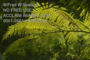 Clip Art Stock Photo of Ferns in the Forest