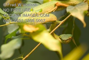 Clip Art Stock Photo of a Tree Snake