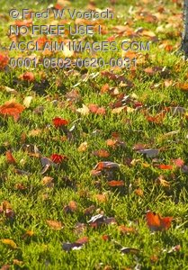 Clip Art Stock Photo of Autumn Leaves on a Lawn
