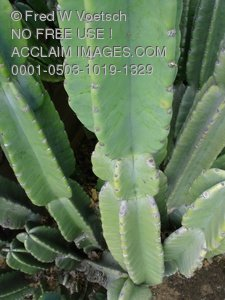 Cactus Plant Clip Art Stock Photo