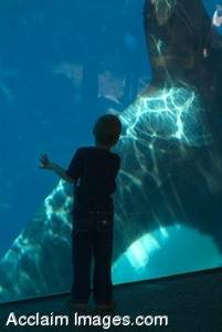 Stock Photo of a Boy and a Killer Whale