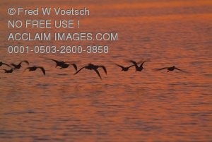 Stock Photo Clipart of Birds Flying Over Mission Bay in San Diego