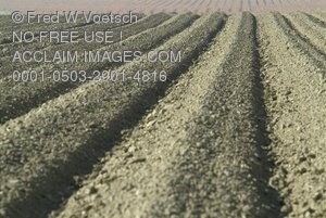 Agriculture: Farming; Plowed Rows On a Farm Clip Art Stock Photo