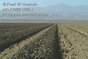 Ploughed Rows in Central Valley of California