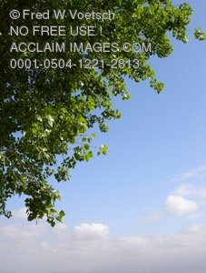 Clip Art Stock Photo of a Tree and Clouds