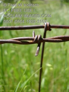 Barb on a Barbed Wire Fence Clip Art Stock Photo