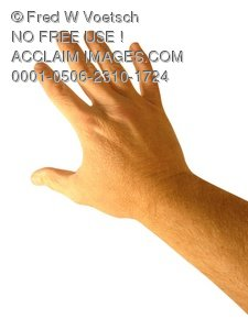 Clip Art Stock Photo of The Backside of a Persons Hand - Photo Object