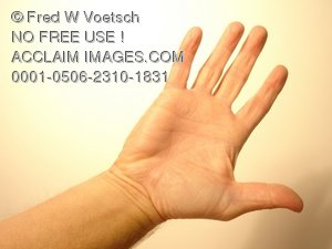 Clip Art Stock Photo of a Hand, Palm, and Fingers