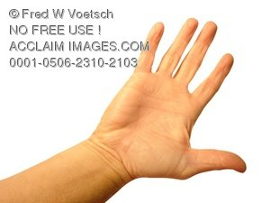 Clip Art Stock Photo of a Hand, Palm, and Fingers - Photo Object