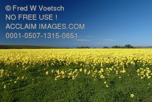 Clip Art Stock Photo of a Field of Flowers