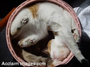 Stock Image Young Cat Stretching In a Basket