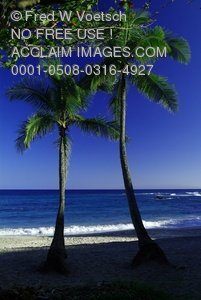 Clipart Stock Photo: Palm Trees On The Beach