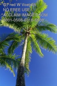 Stock Image of a Palm Tree